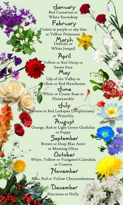 Birth Month Flower and Their Meanings