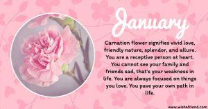 January Birth Flower Carnation
