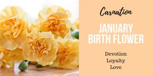 January Birth Flower Carnation Meaning