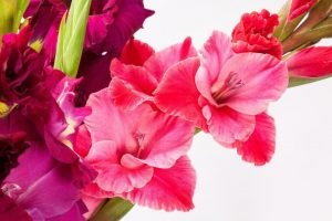 January Birth Flower Color