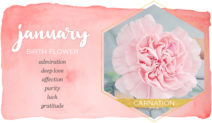 January Birth Flower and Meaning
