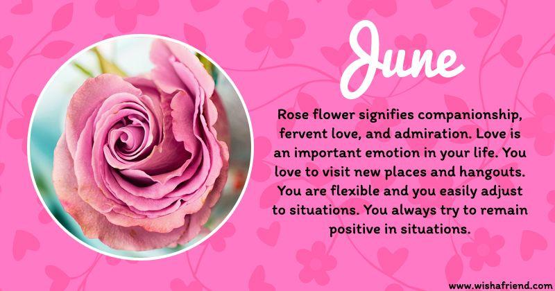 June Birth Flower Rose