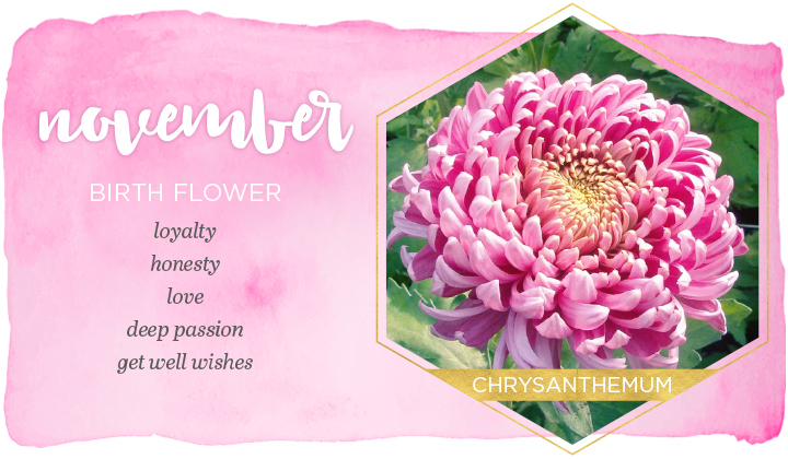 November Birth Flower
