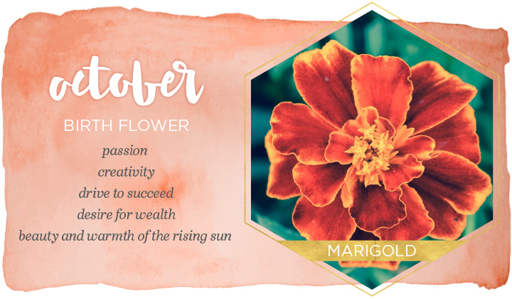 October Birth Flowers
