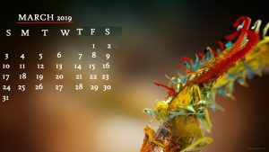 March 2019 Calendar Plant Desktop Wallpaper